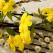 Sâmbăta lui Lazăr: Tradiții și obiceiuri, ce să (NU) Faci de Moșii de Florii!