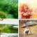 17 imagini care ne întorc în copilărie și ne arată cum se bucură cei mici de ploaie