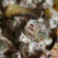 Salata de limba de porc cu ciuperci