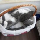 Top 10 cele mai haioase pisici din Concursul Gourmet + Pisicile Redactiei