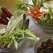 Propuneri culinare de post: 7 retete nepermis de gustoase