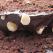 Desertul de duminica: Chec cu ciocolata, cirese si alune de padure