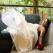 Sindromul Bridget Jones � De ce vor femeile sa se casatoreasca inainte de 30 de ani?