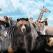 Test psihologic: Ce animal esti?