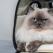 7 genți moderne pentru transportul animalelor - ca să le ai mereu cu tine
