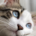 7 probleme de sănătate întâlnite adesea la pisici. Cum recunoști primele semne