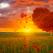Horoscopul celtic al copacilor: Descopera-ti intelepciunea sacra!