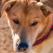 Sondaj pe Facebook Garbo.ro: Esti pentru eutanasierea cainilor fara stapan sau impotriva?