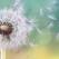 AM ÎNVĂȚAT CĂ… Cele mai prețioase și adevărate Învățături despre Dragoste și Viață de pe internet