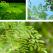 Descopera pulberea ecologica din arborele de moringa