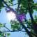 Maestrul zen de pe strada ta: 5 lectii de viata pe care le poti invata de la un copac