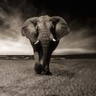 Atasament - Elefantul cu care traiesti, dar pe care nu poti sa il vezi