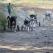 Marea strangere de hrana pentru animalele fara stapan - 15-17 iunie