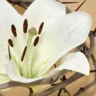 Cele 12 Vineri Mari: Afla ce zile de vineri de peste an trebuie 'tinute' pentru a-ti merge bine!
