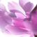 6 produse naturiste pentru sanatatea ginecologica a femeii
