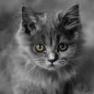 20 de lucruri pe care nu le stiati despre pisicute