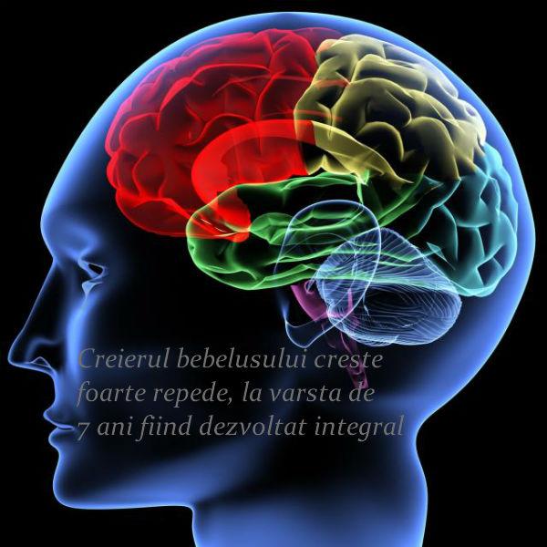 Creierul bebelusului creste rapid