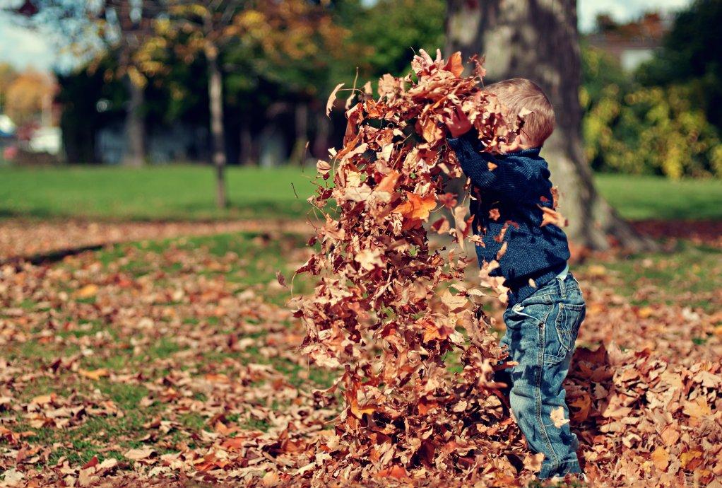 Joaca cu frunze