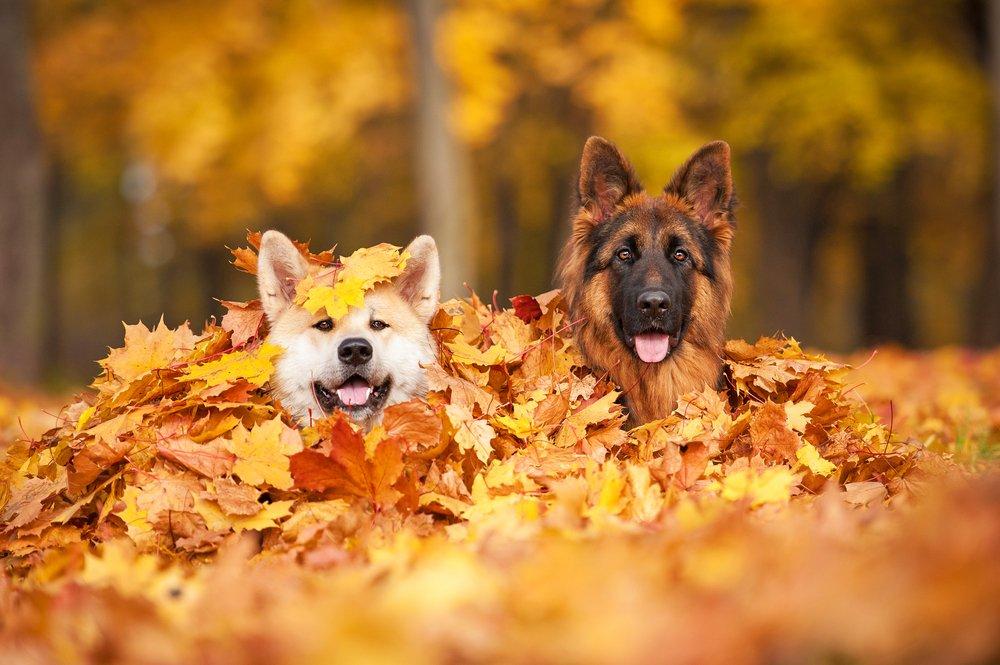 Fericire in frunze