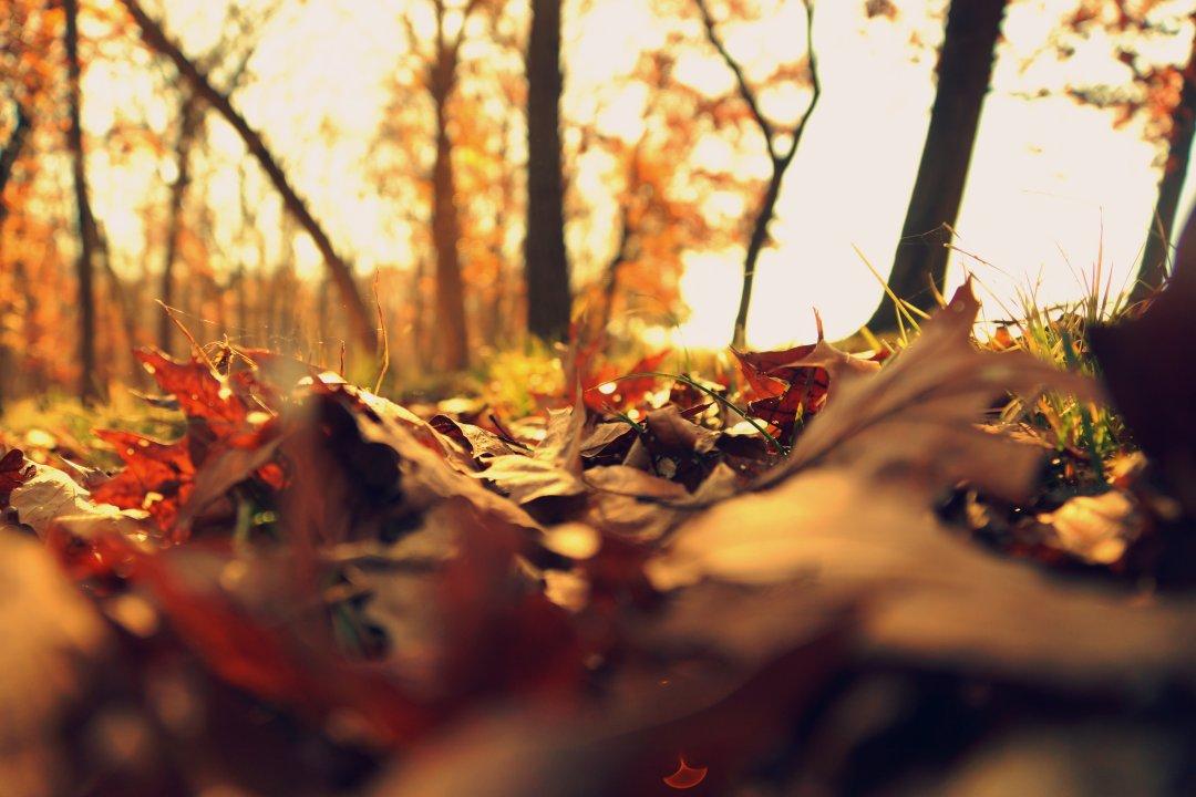 Covoare de frunze