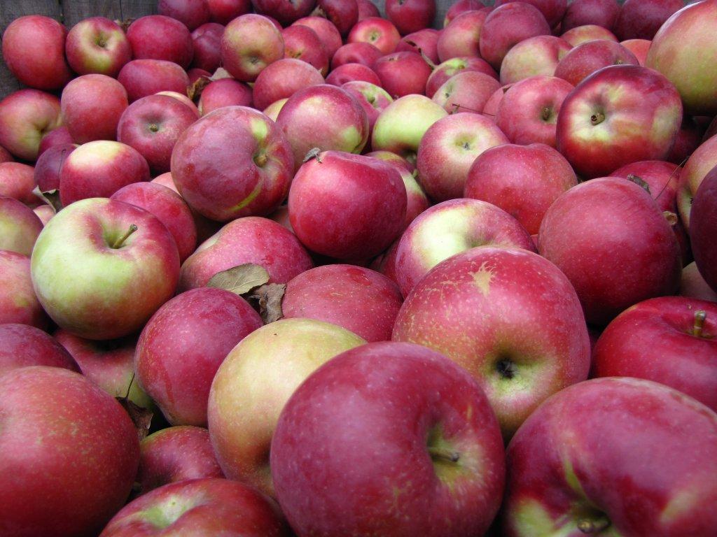 Fructele vietii
