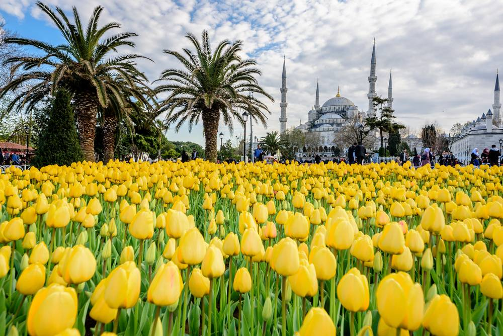 Lalele in Sultanahmet, Istanbul