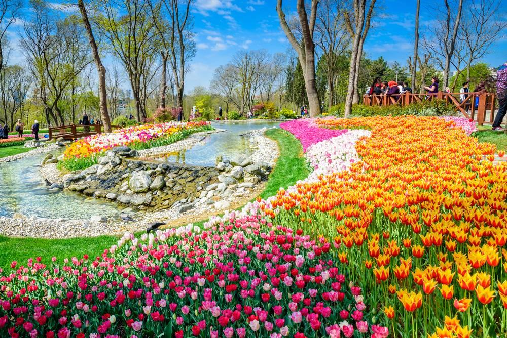 Lalele in parcul Emirgan, Istanbul