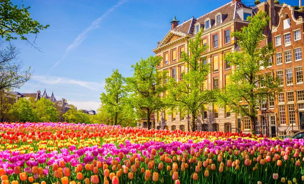 Lalele in Amsterdam, Olanda