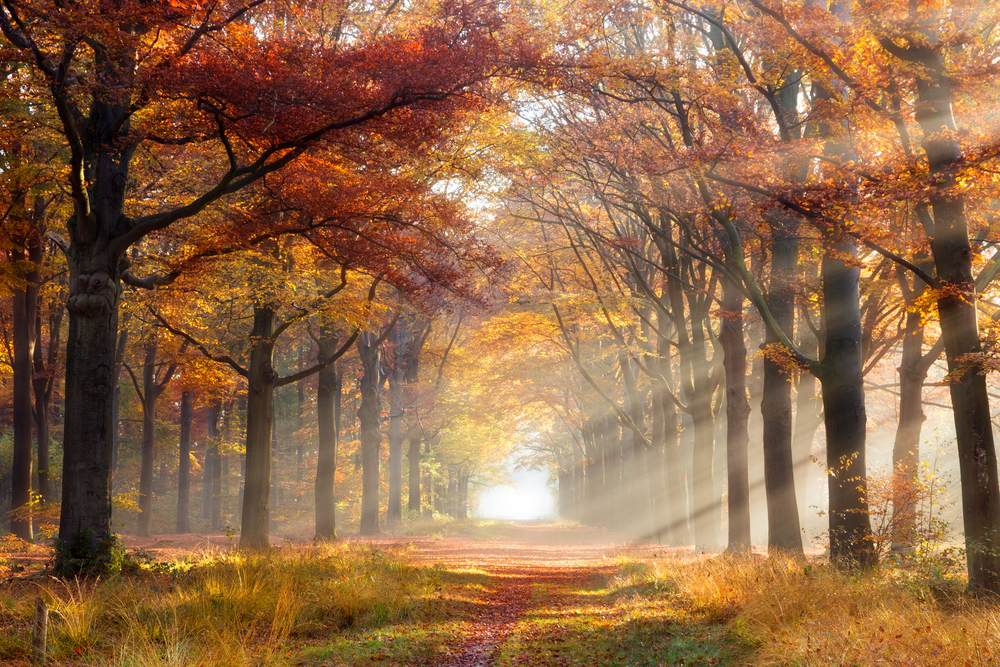 Razele soarelui isi fac loc printre frunzele copacilor