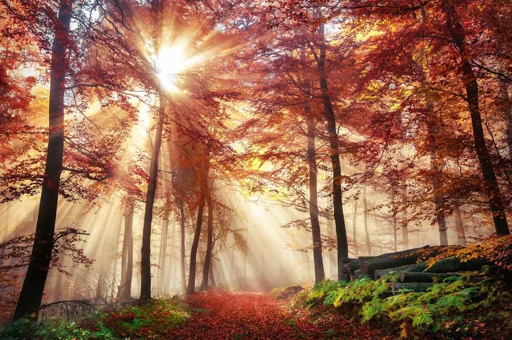 Ceata, soare, frunze vii si moarte si padurea prinde viata