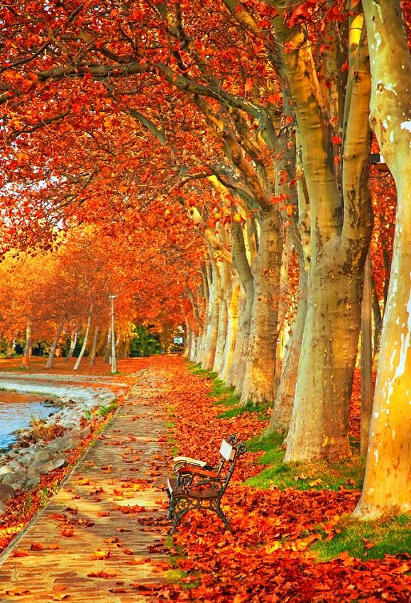 Copacii cu frunze curgatoare