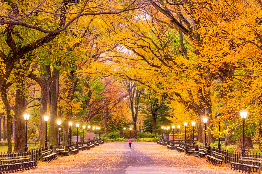 Toamna in New York (Central Park)