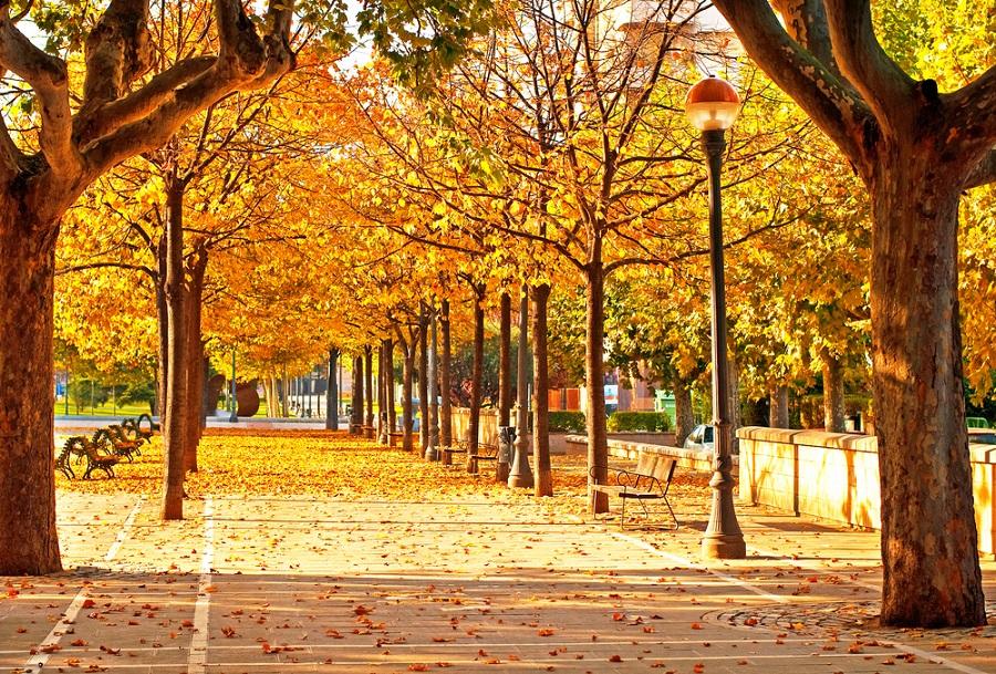 Lumini, culori si frunze pe aleile din Spania