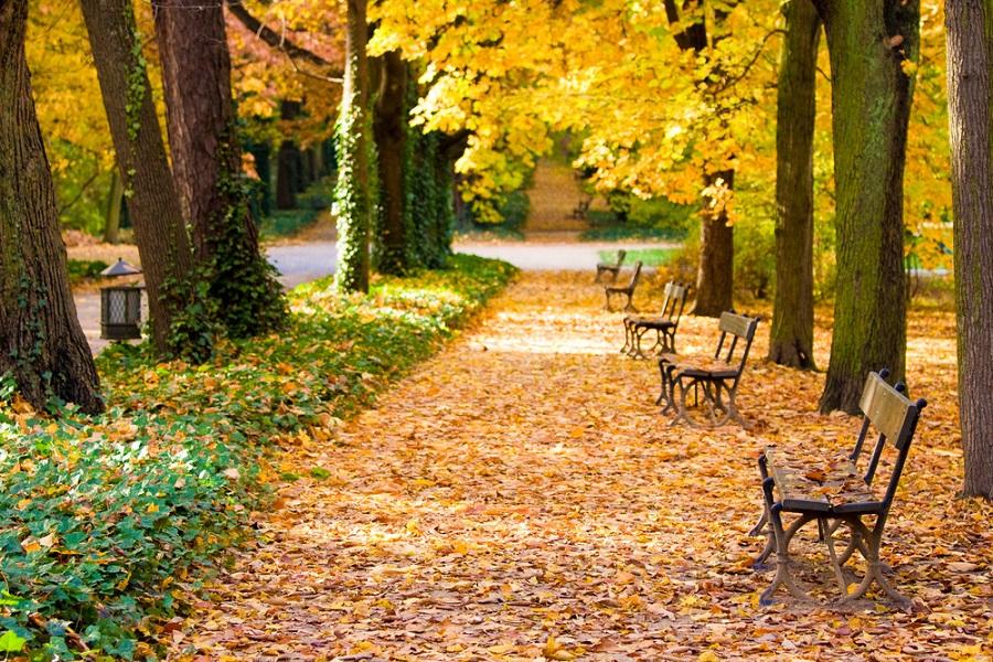 Poezie pe aleile parcului Lazienki din Varsovia