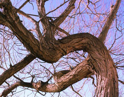 Extractul de scoarta de salcie alba (Salix alba)
