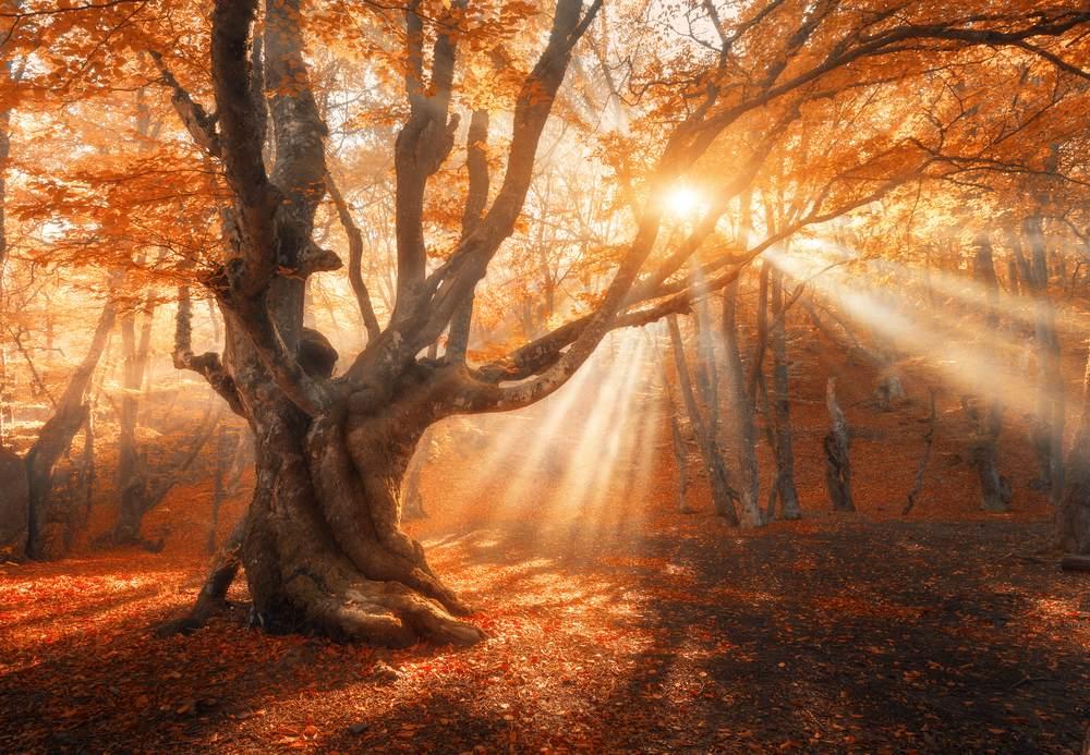 Copacul fermecat
