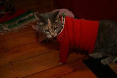 Pisica in rosu